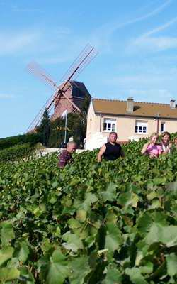 vignoble moulin